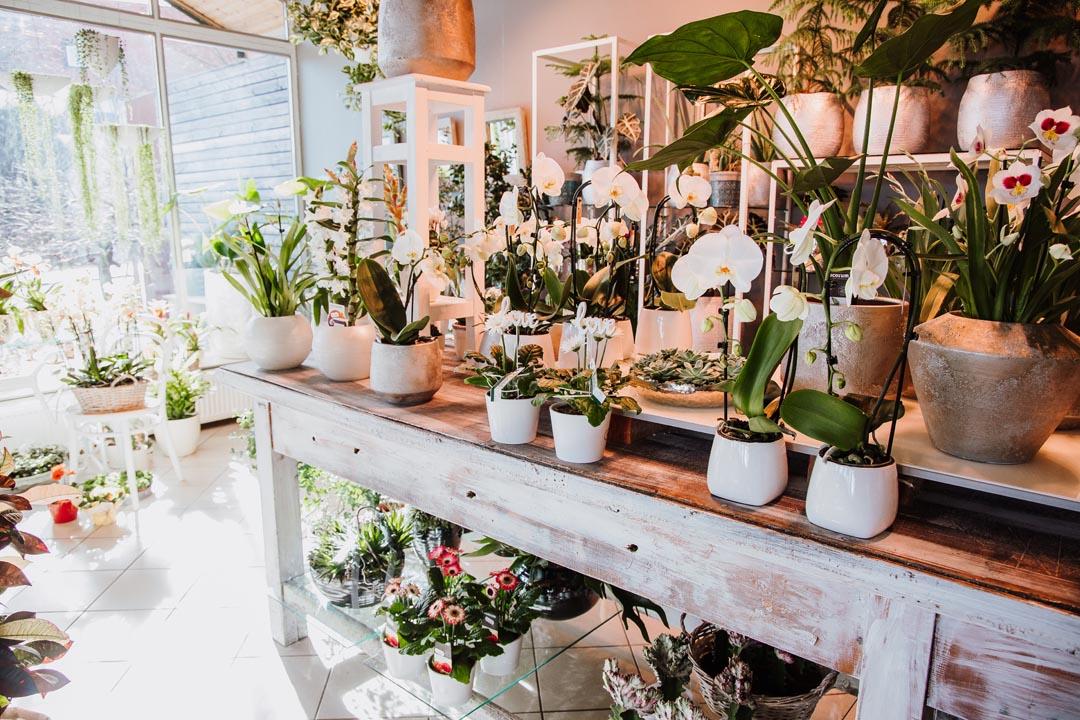 Blumen - Floristik - Gärtnerei Trinkl, Loipersbach, Burgenland