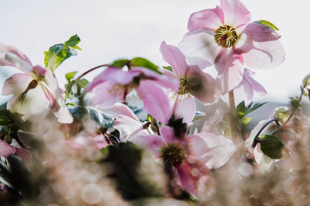 Blumen-Floristik-Gärtnerei Trinkl, Loipersbach: Frühling und Ostern